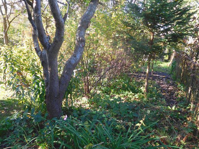 ...mit schönem Baum- und Strauchbestand...